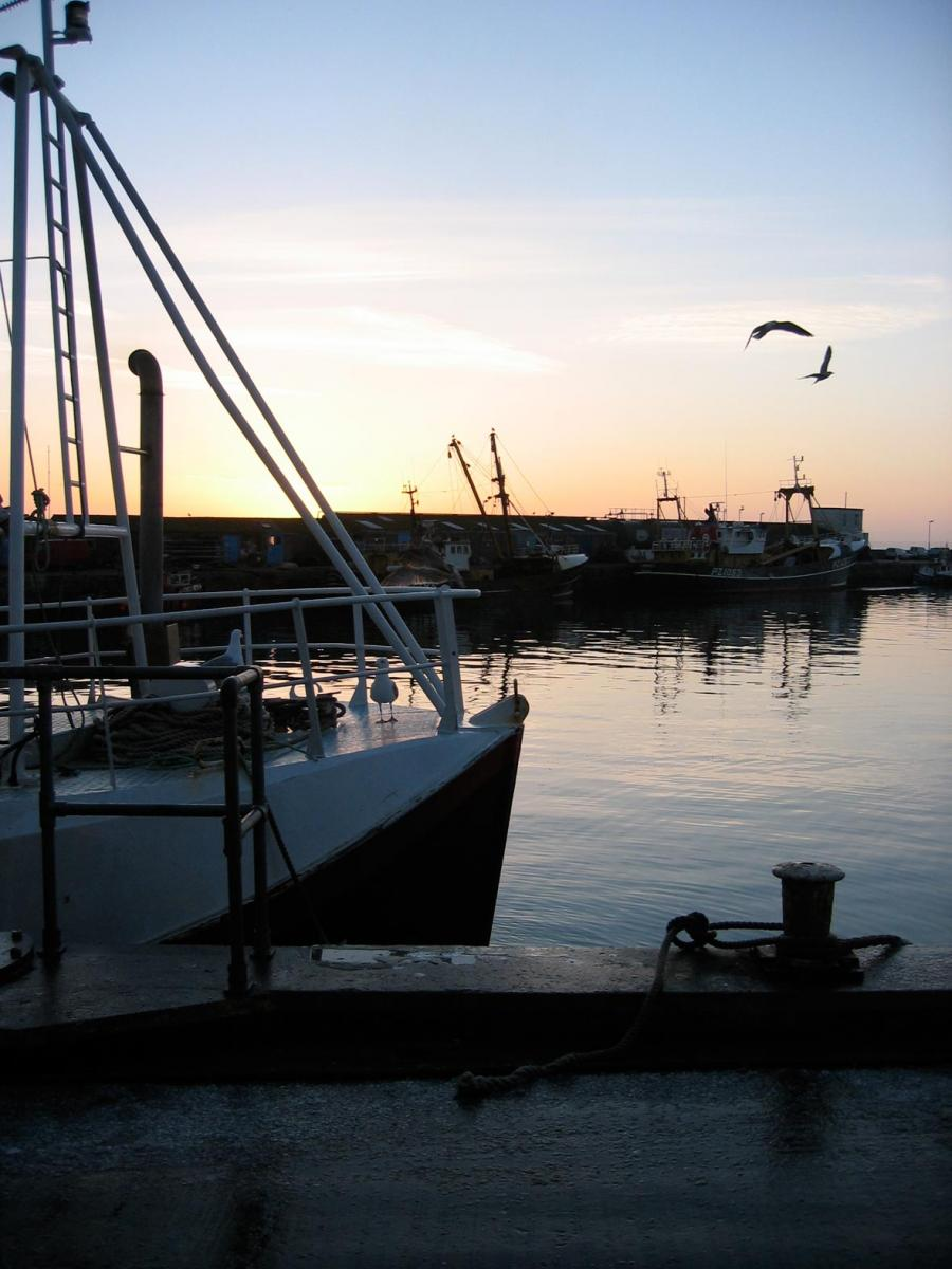 Newlyn Harbour Fish Market & Processing Units - Newlyn Harbour